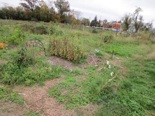 garden on 10-28-12